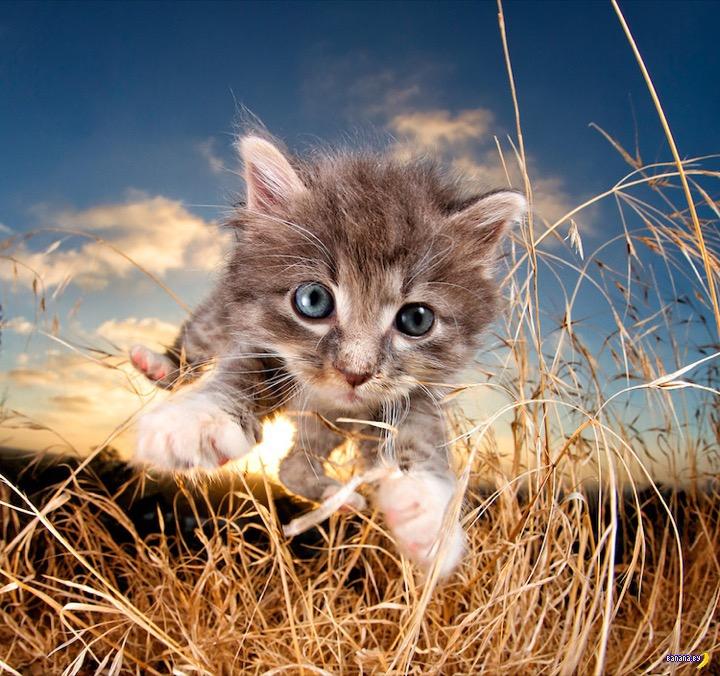 Среди дневной суеты и рабочей рутины всегда есть место для котят