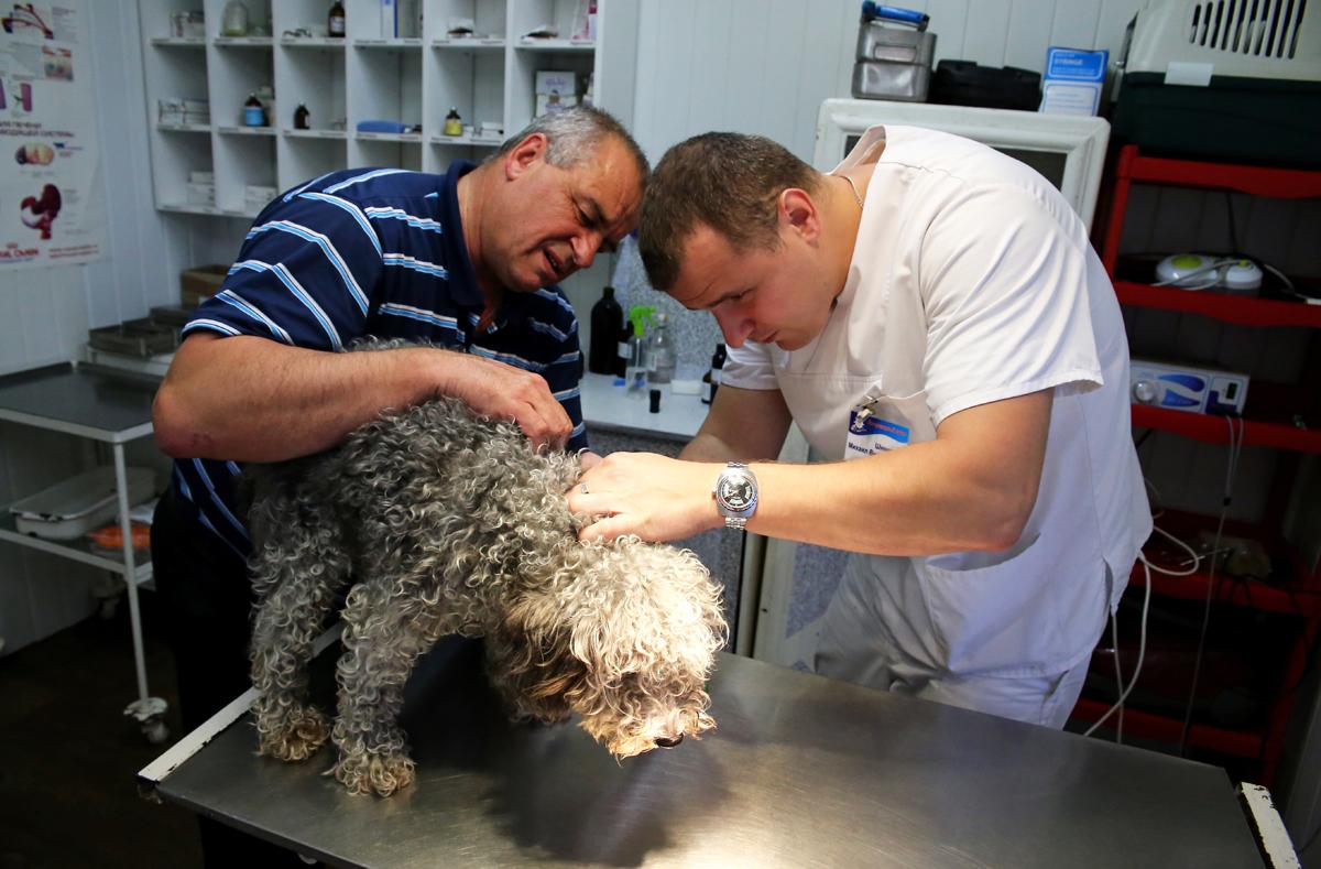 Ветеринар Михаил Шинкарев проводит осмотр собаки на наличие клещей. Фото: Евгений ТИХАНОВИЧ