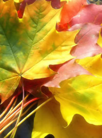 Фестиваль «Танцующая осень»