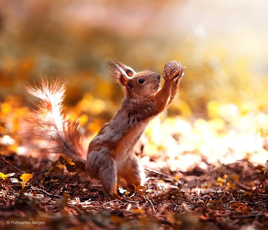"""Оскал волка, """"удивление"""" утенка, белка-""""баскетболист"""" - украинский фотограф показал жизнь животных крупным планом"""