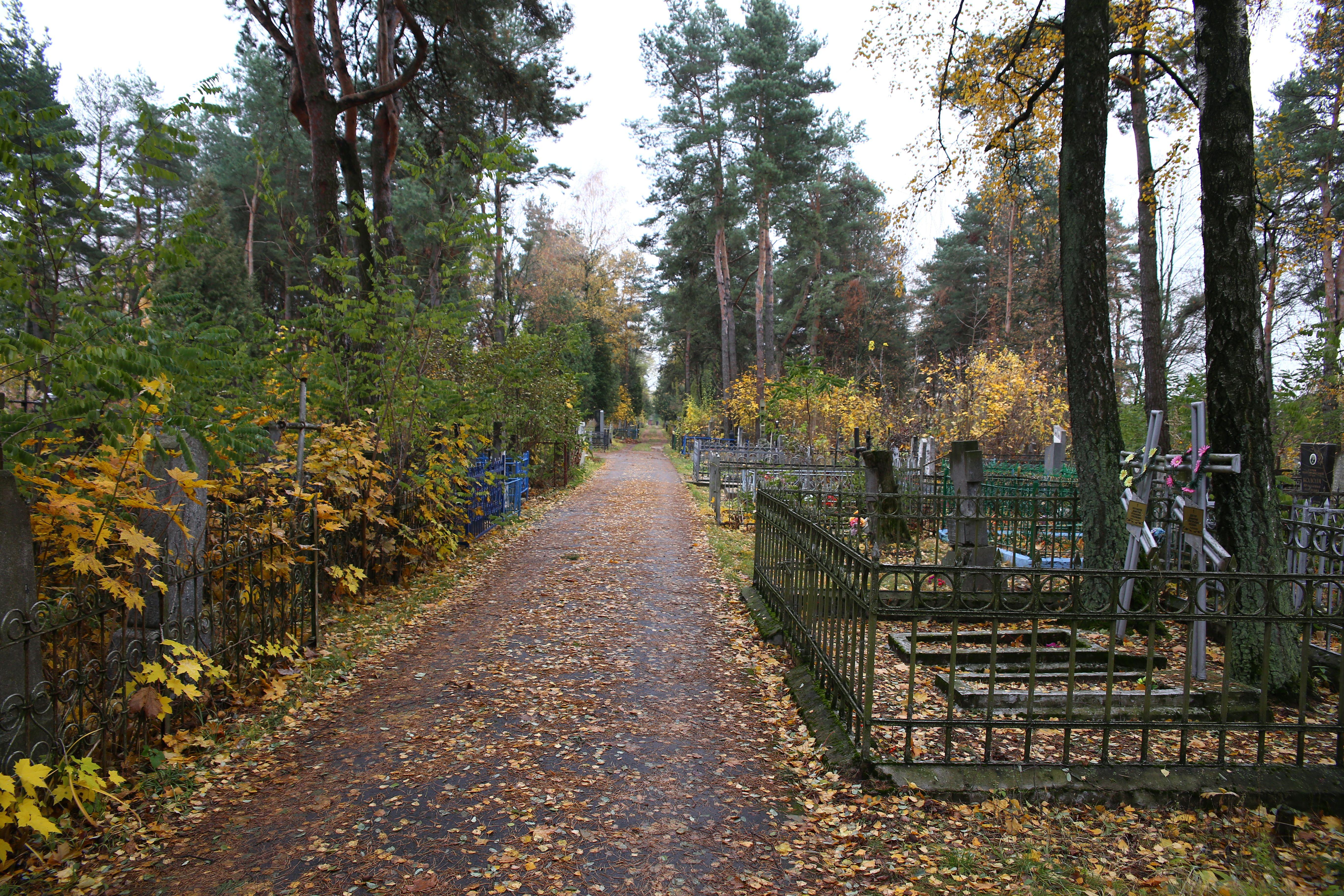 Старое кладбище. Фото: Евгений ТИХАНОВИЧ
