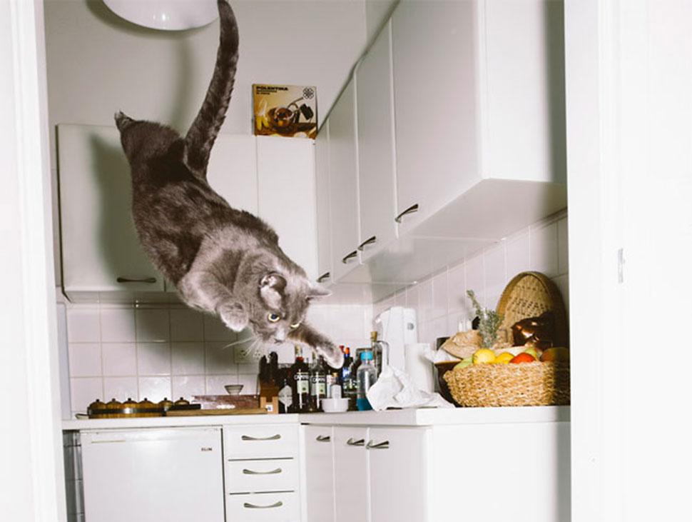 Необычные снимки летающих котов
