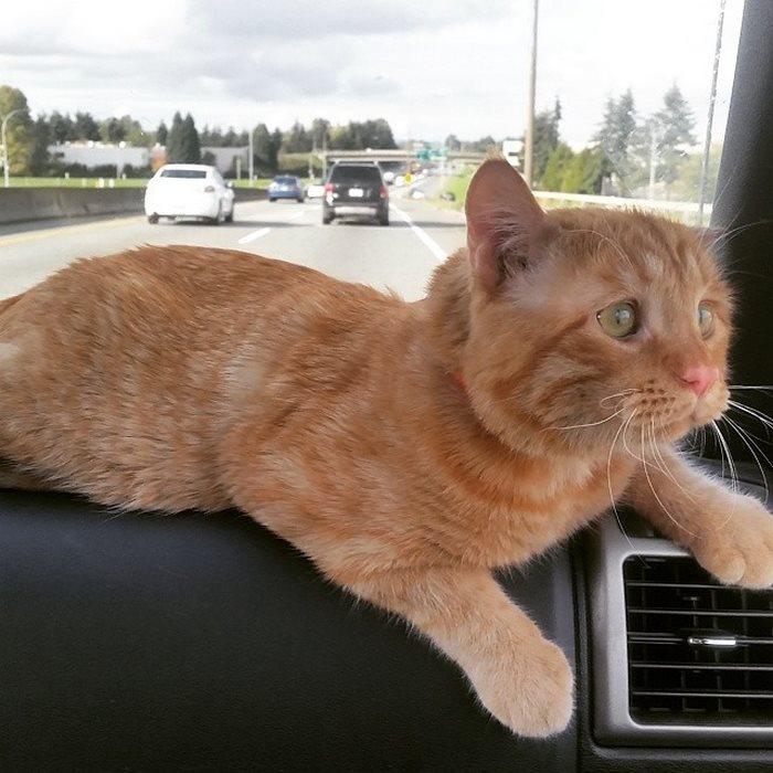 Самый грустный кот интернета стал счастливым