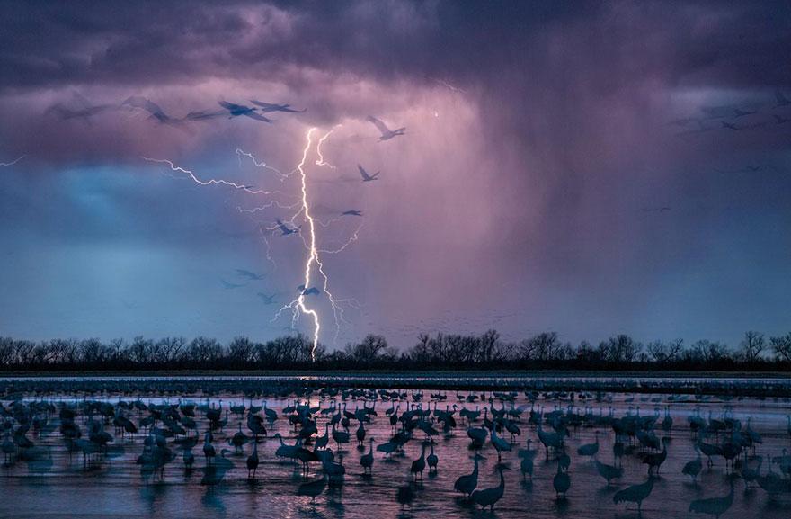 Вуд Ривер, Небраска. 413 тысяч канадских журавлей на мелководье реки Платт.   Фото: RANDY OLSON, boredpanda.com
