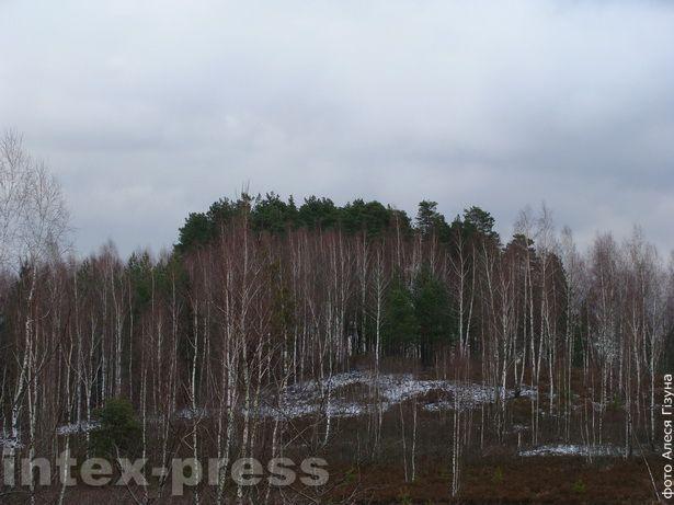 Грудок старога лесу з могілкамі здалёк відаць на палігоне