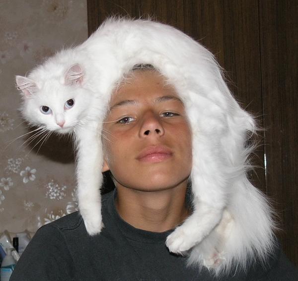 Артур и кот Пушок. Настоящая живая мягкая игрушка