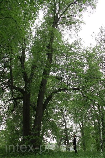 Крошынскі парк