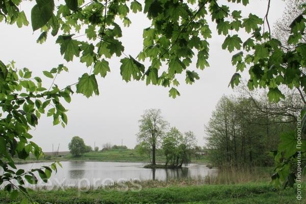 Сажалка з выспай у Верхне-Чэрніхаўскім парку