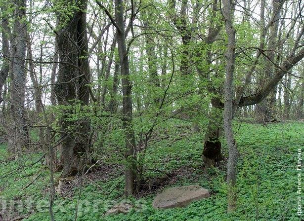 Куток парку ў Начы-Свянціцкай увесну