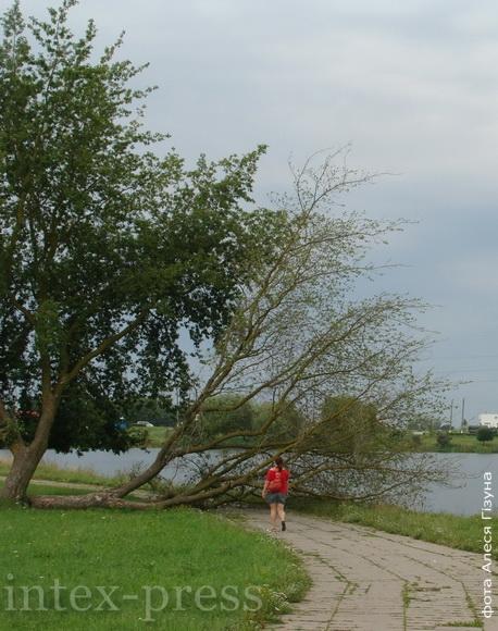 Только вокруг Светиловского озера буря сломала порядка десятка деревьев