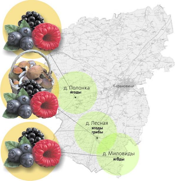 Карта самых грибных и ягодных мест Барановичского района (по данным ГЛХУ «Барановичский лесхоз»)