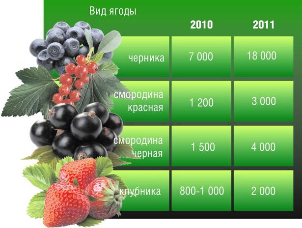 Средние цены на некоторые виды ягод в заготовителтьных пунктах в Барановичском регионе, руб. за кг (по состоянию на 21 июля 2011 г)