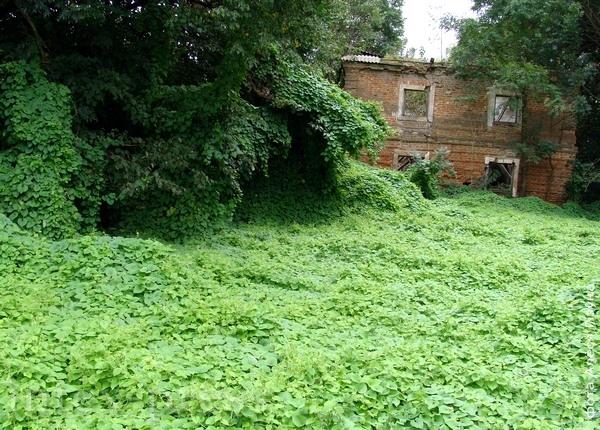 Колішні гаспадарчы двор