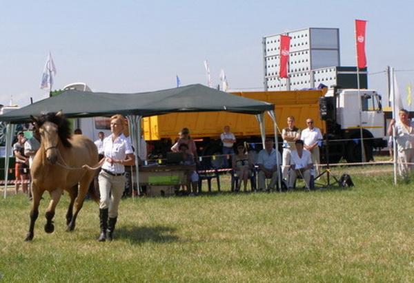 В 2011 году Ирина Прусевич и ее лошадь Стужа заняли 2-е место на фестивале белорусской упряжной лошади в Минске