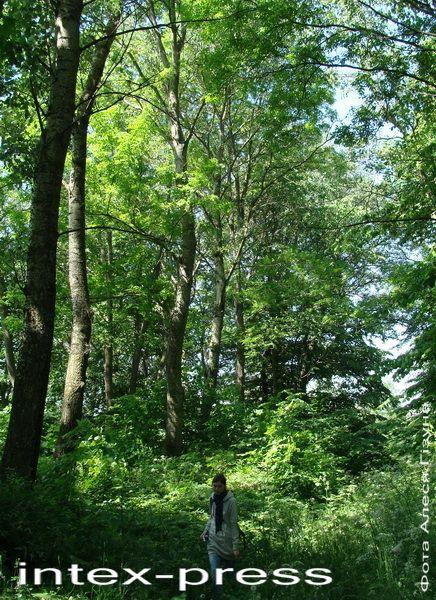Парк у Асташына