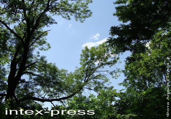 Куток Асташынскага парку з ясенем