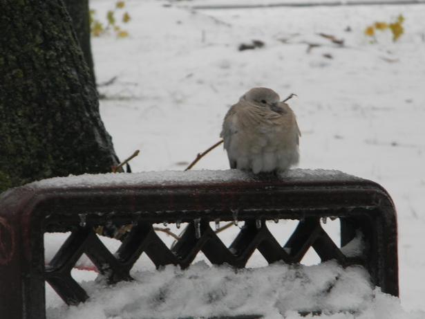 ...и птицам