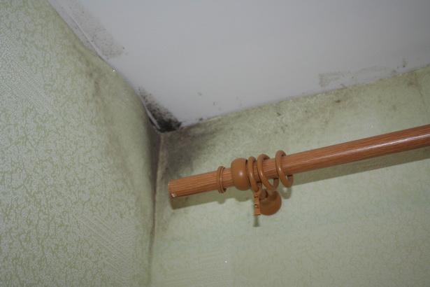 Некоторые жильцы не вешают шторы и не придвигают мебель близко к стенкам: грибок размножается на всех находящихся рядом предметах