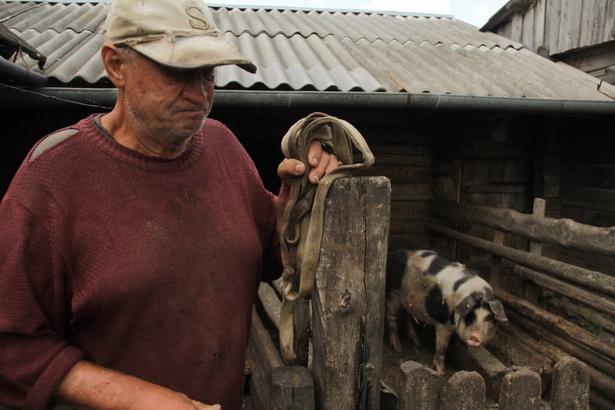 Житель деревни Адаховщина на своем подворье 14 августа ждет ветврачей, которые заберут свиноматку. Фото Intex-press/Людмила Прокопова