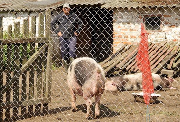 Сельчанин Юрий Тарабаш лишился двух свиней. Фото Intex-press/Людмила Прокопова