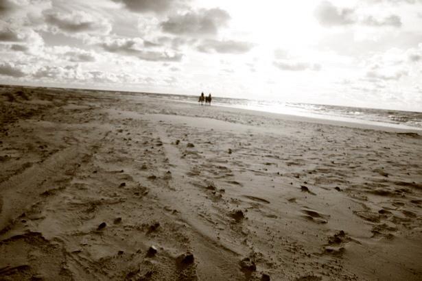 На берегу Балтийского моря