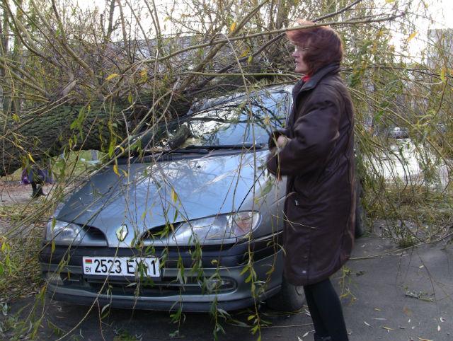В Барановичах 4 ноября дерево упало на автомобиль. Фото Александра Трипутько
