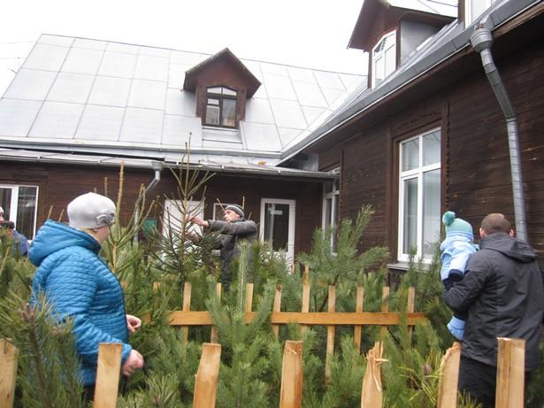 В Барановичах открылись елочные базары. Фото Ольга ШИРОКОСТУП
