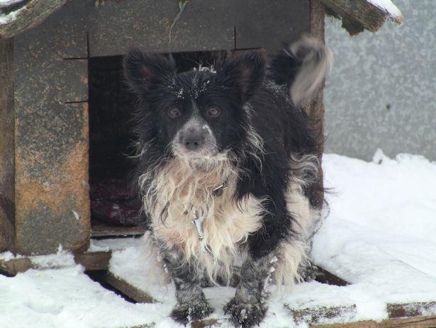 У каждой бездомной собаки в приюте есть имя и паспорт.