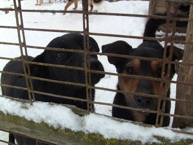 В вольерах находится по несколько собак, многие живут в приюте по 7 лет.