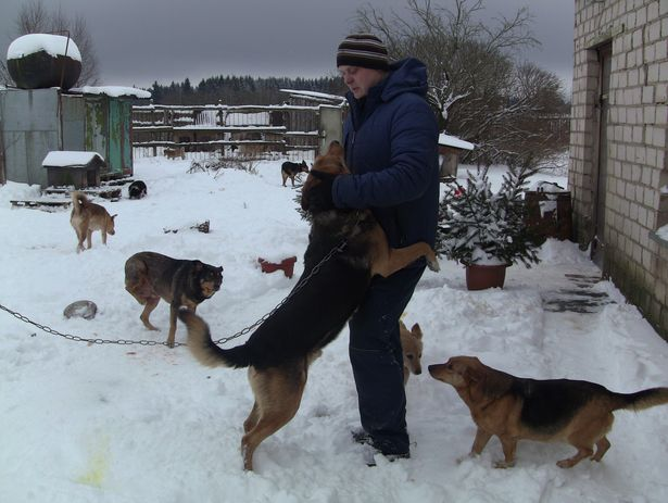 Зять Елены  Дмитрий всегда готов подвезти в приют корм для собак, а также  ветошь, стройматериалы и лекарства.