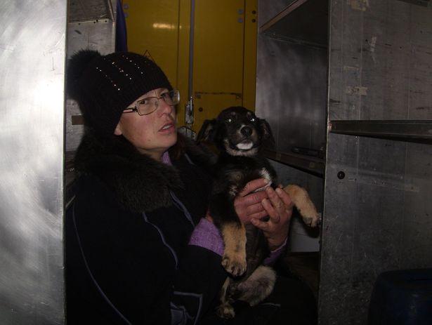 Черного щенка, который едва не замерз, хозяйка приюта Елена подобрала 17 января на автобусной остановке.