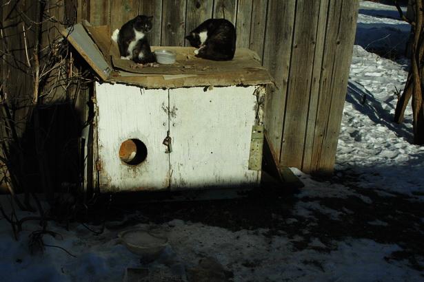 Сколоченные домики для котов во дворике домов по улице Лисина. Барановичи