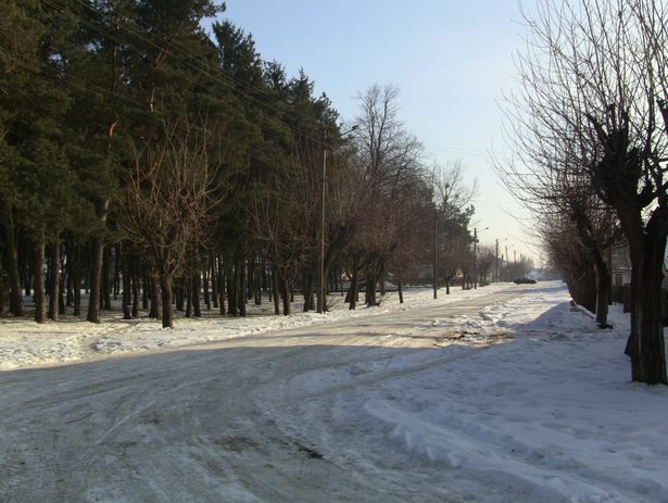 Старый парк со стороны ул. Царюка 7.02.2014 Фото: Александр Трипутько