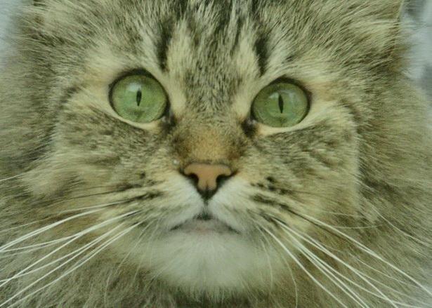 Даже самое маленькое из кошачьих - совершенство. Леонардо да Винчи
