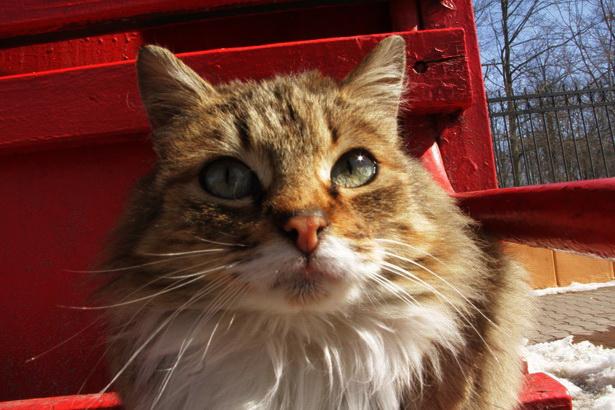Если бы человек мог быть скрещен с котом, это улучшило бы человека, но ухудшило бы кота. Марк Твeн