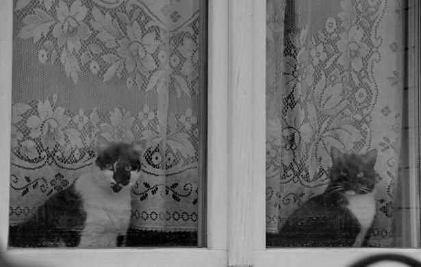 В доме, где есть кошка, других украшений не нужно. Уэсли Бэйтс