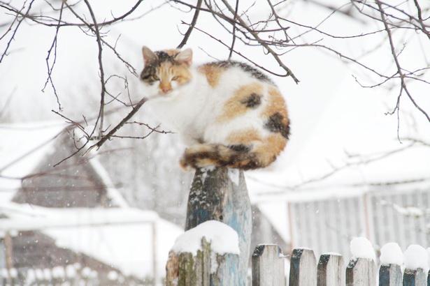 Самое приятное в кошке - любовь к комфорту. Камптон Маккензи