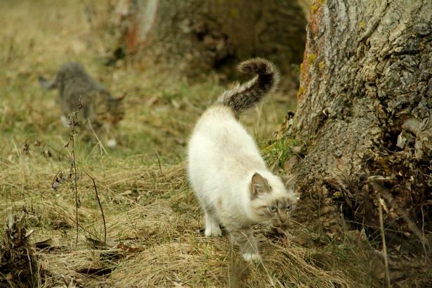 У кого есть кошка, тот может не бояться одиночества. Даниель Дефо