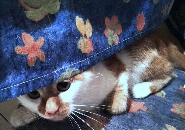 Когда мы с кошкой играем, еще вопрос, кто с кем играет - я с ней или она со мной. Мишель де Монтень