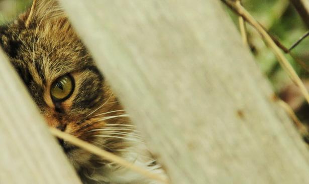 Чужая душа - потемки, ну а кошачья - тем более. Антон Чехов