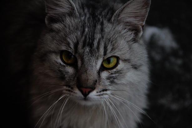 Любить кошку можно только на ее условиях. Пол Грэй