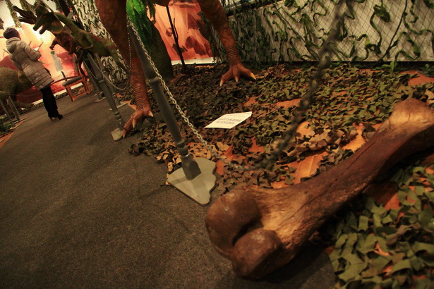 Найденная в Беларуси берцовая кость мамонта весом в 20 кг