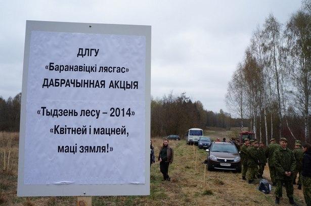 Под Барановичами посадили кедровую рощу. Фото из архива участников.