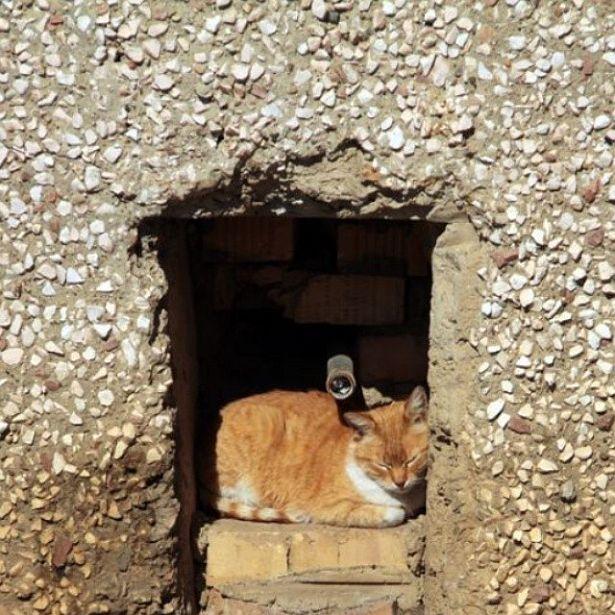 @intex_press  Котка-сплюшка
