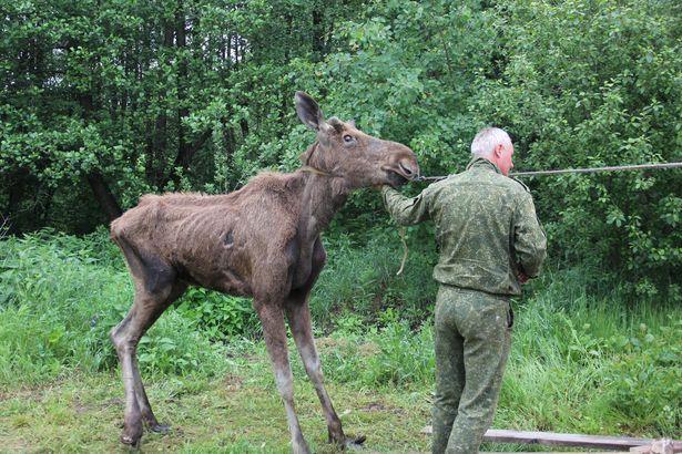 Яша сопротивляется и не хочет ехать в Беловежскую пущу. Фото Александр Трипутько.