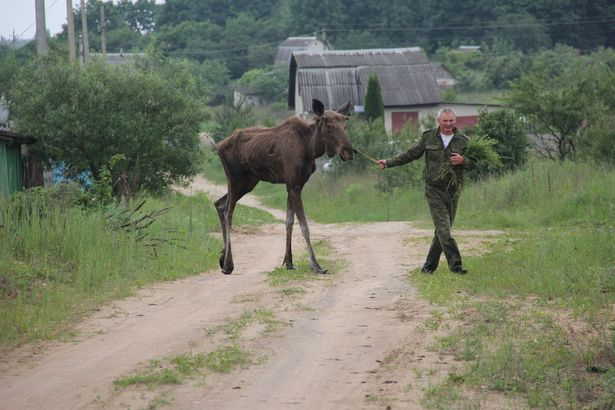 Прощальная прогулка по дачному поселку. Фото Александр Трипутько.