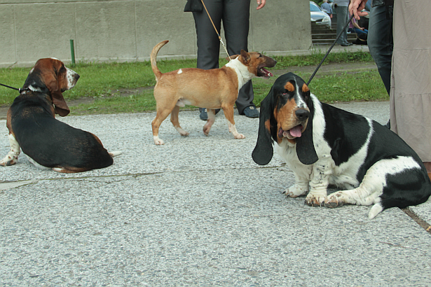 В Барановичах прошла выставка собак