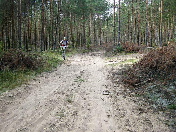 На лесной песчаной дороге. фото Виктора ШЕРЫШЕВА