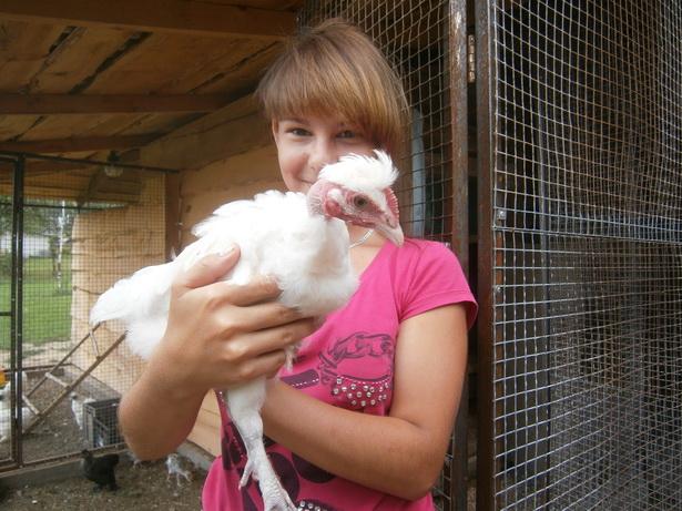 Оливия с курицей-голошейкой. фото Натальи Семенович