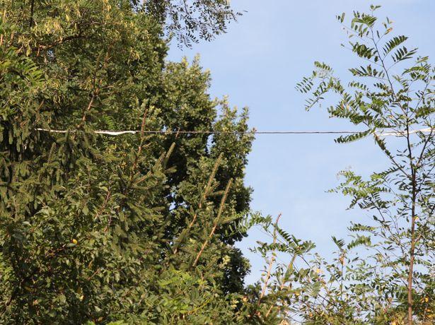 Барановичский горисполком утверждает, что электрического кабеля нет. Фото: Дмитрий Макаревич.
